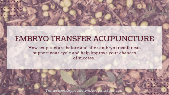 "Photo with plant background with text: ""Embryo Transfer Acupuncture: How acupuncture before and after embryo transfer can support your cycle and improve your chances of success."""